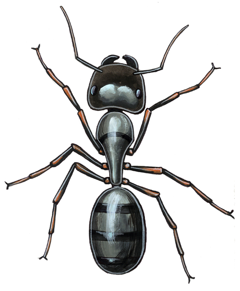 Color rendering of a carpenter ant.