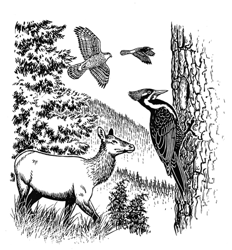 Woodpecker and elk