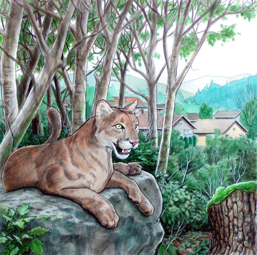 Suburban cougar. Watercolor and pencil.