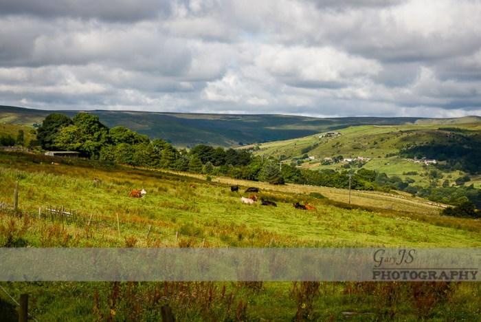 Marsden fields