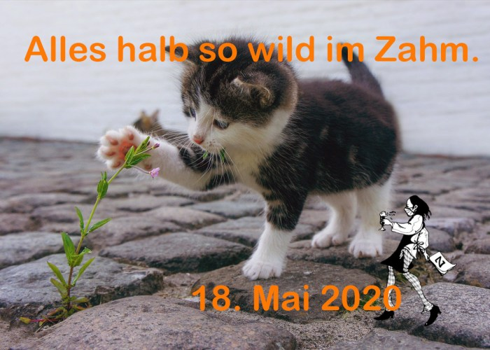 Restaurant Gasthaus Zahm: Alles halb so wild im Zahm.