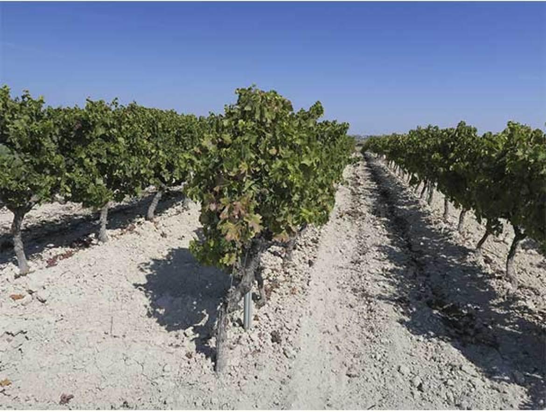 Concurso de cocteleria vinos de Jerez Bodegas Lustau Viñas