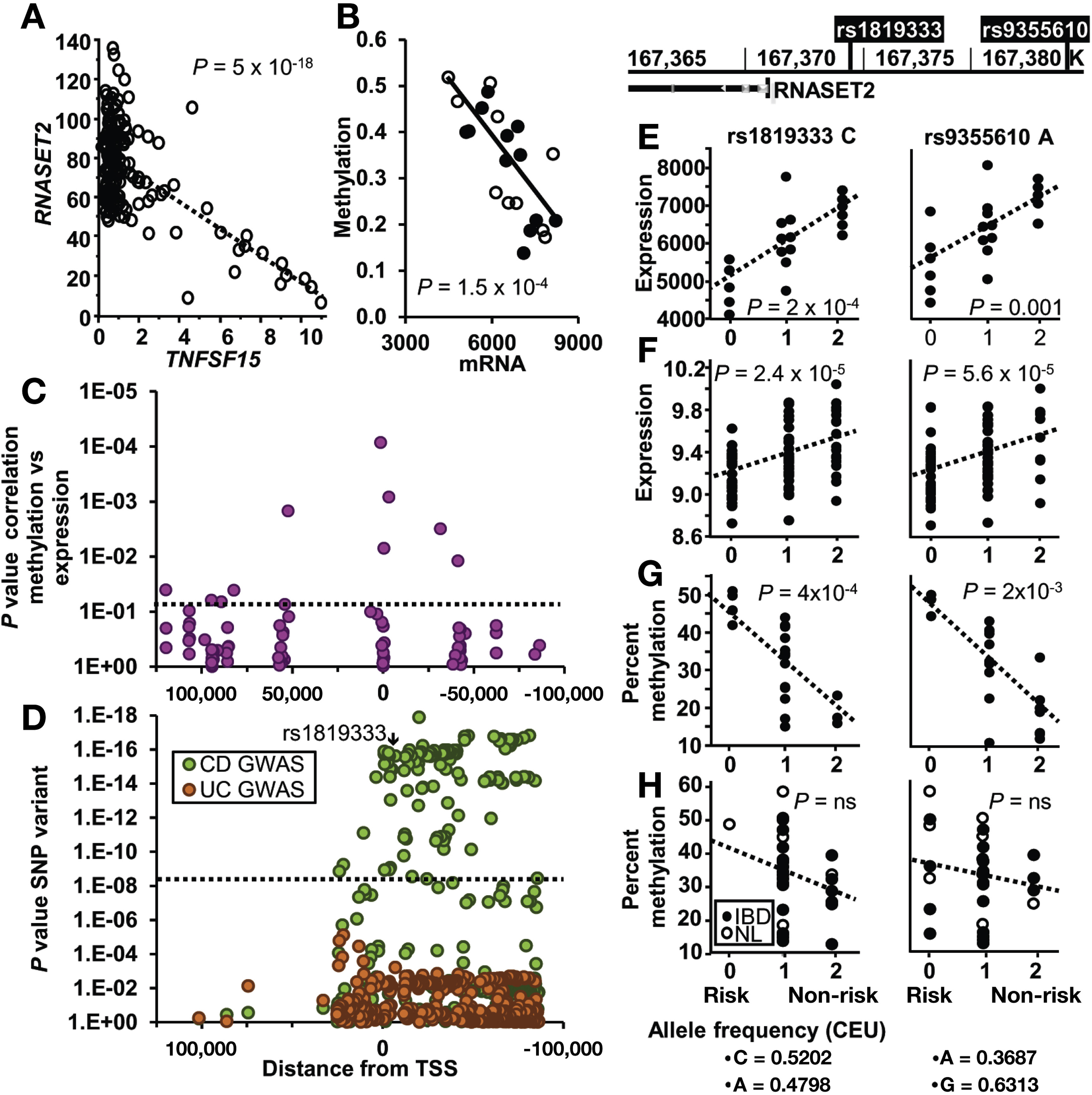 Association Of Ribonuclease T2 Gene Polymorphisms With