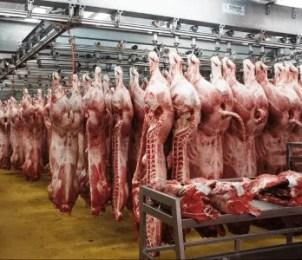 Carcasses de bœuf au marché de Rungis