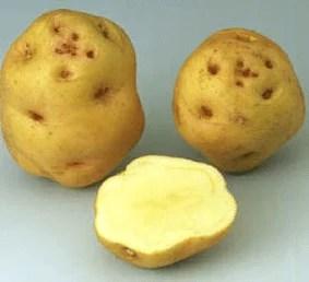 Yeux de pomme de terre