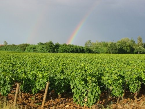 Arc-en-ciel sur le vignoble du Beaujolais