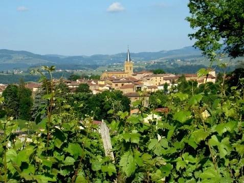Vignoble et village du Bois d'Oingt