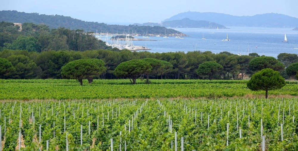 Vignoble sur l'île de Porquerolles