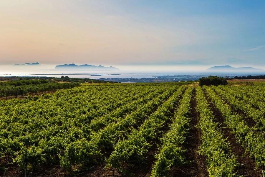 Vignoble de Marsala