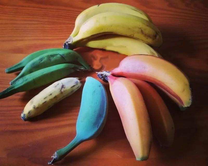 Les différentes couleurs de bananes