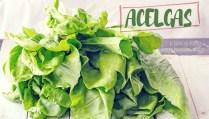 Cómo cocinar con acelgas (y que queden bien buenas) - tutorial en GastronomiaVegana.org