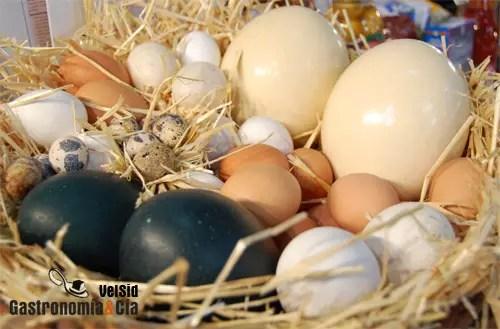 https://i2.wp.com/www.gastronomiaycia.com/wp-content/uploads/2008/07/huevos_morenos_blancos.jpg