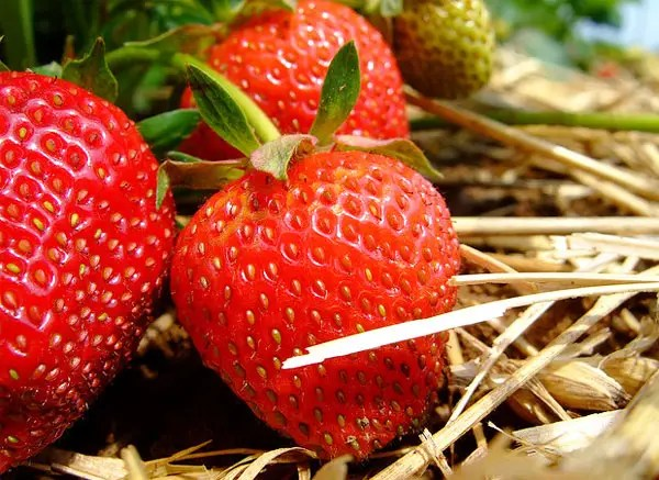 Alimentos modificados genéticamente