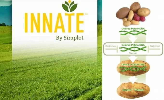 Patatas modificadas genéticamente