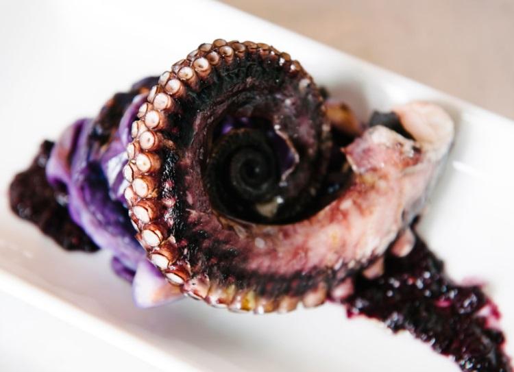 meditrina octopus