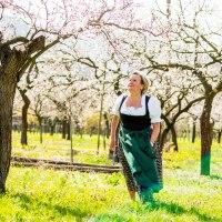 Rezepte und Geschichten aus Österreichs Marillengarten