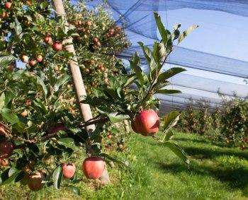 Land schafft Leben Lebensmittelproduktion