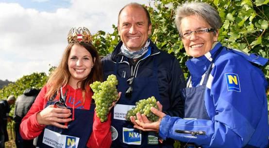 Charity-Weinlese 2016 Weinherbst Niederösterreich