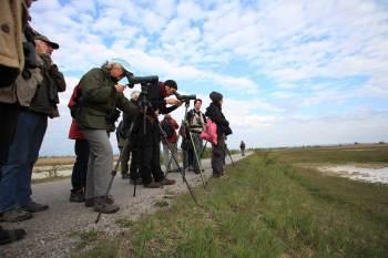 Nationalfeiertag wandern Nationalparks Austria Vogelbeobachtung Neusiedler See Seewinkel