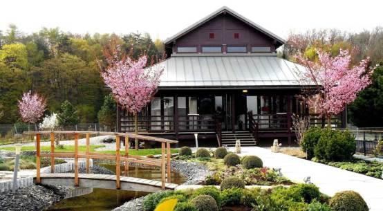 Genussreise durch Japan Kirschblüten Picknick