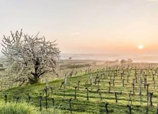 Frühlingshighlights in Niederösterreich Tourismus