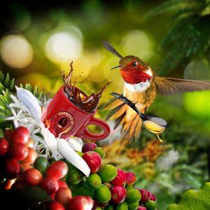 """Der Kolibri als exotisches Federvieh wurde für die """"Espress it""""-Werbelinie als Maskottchen ausgewählt."""