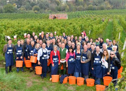 Insgesamt 1.250 Kilo Grüner Veltliner-Trauben wurden gelesen. Der Reinerlös von 5.000 Euro kommt dem Himmelschlüsselhof in Texing zugute.