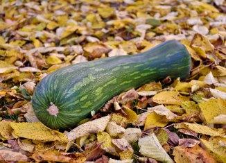 Kürbis-Variation Farbenfrohes Herbstgemüse