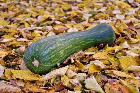 Kürbis-Variationen Farbenfrohes Herbstgemüse