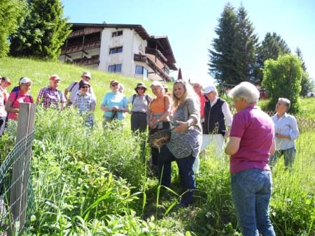 Kräuterwanderungen in Südtirol Naturschätze entdecken