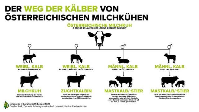 """""""Kalb Rosé"""": Milchrassekälber verbleiben in Österreich"""