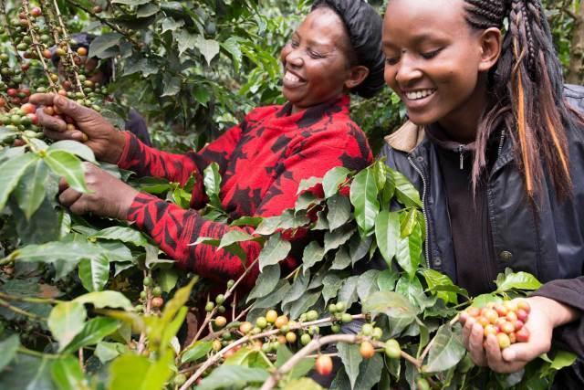 Globale Kaffee-Nachhaltigkeitsprogramme In den letzten Jahren hat Nestlé 15.000 Frauen in Ostafrika Wissen über gute landwirtschaftliche Praktiken, Finanzkompetenz und Führungsqualitäten vermittelt. Mit ihren neuen Fähigkeiten können diese Frauen ihr Einkommen verbessern. Größere finanzielle Unabhängigkeit stärkt nicht nur die Frauen selbst, sondern ist auch wegweisend für Mädchen und Frauen in der Zukunft.