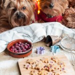 Doggie Holiday Cookies