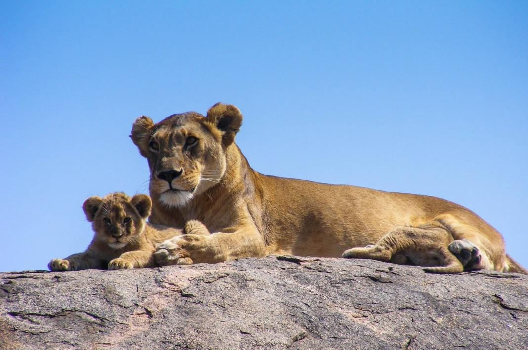 Safari travel guide for the Kruger National Park - #southafrica #travelblogger #travel #blogpost #safari #animals #nature #wildlife #adventure #bushbreaks #outdoors #safariguide #africa #camping #luxury #game