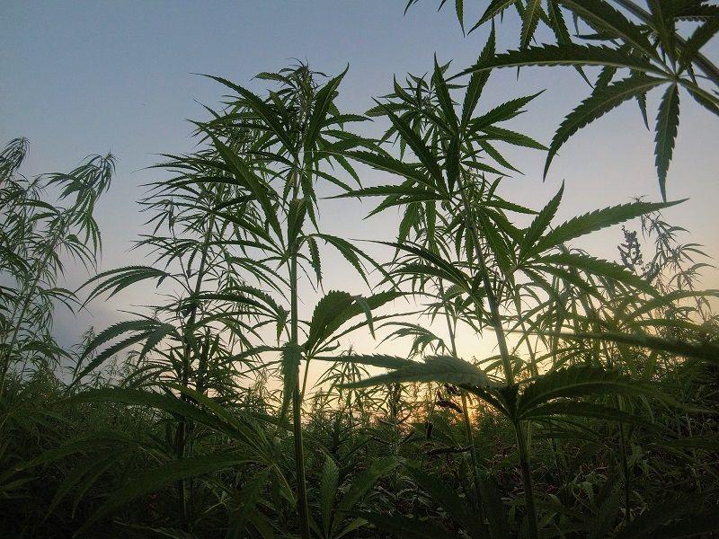 legalizar la droga