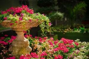 Offene Gärten rund um den Alten See 2020