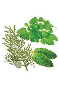 AromaTouch® Massage Blend