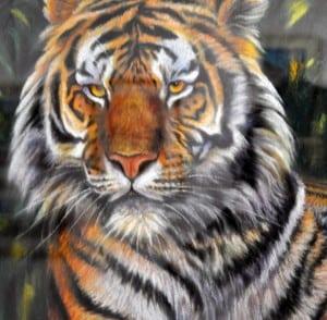Tiger (close-up detail)