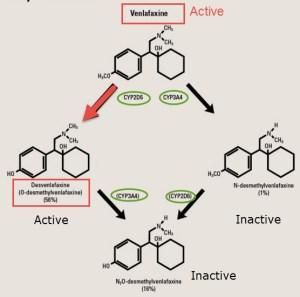 Desvenlafaxine and Venlafaxine
