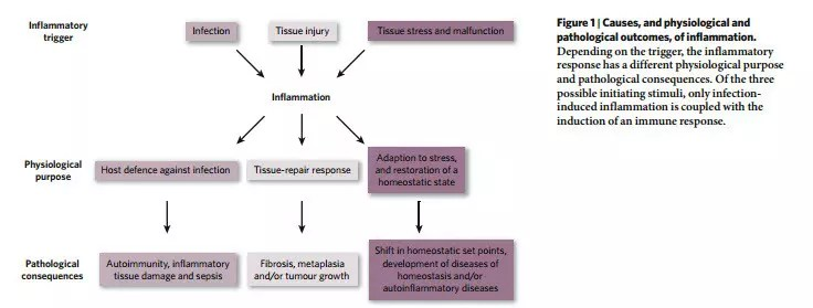 parainflammation-vs-inflammation