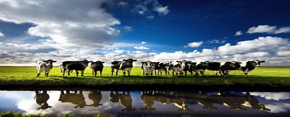 image of Argentina: Los lácteos