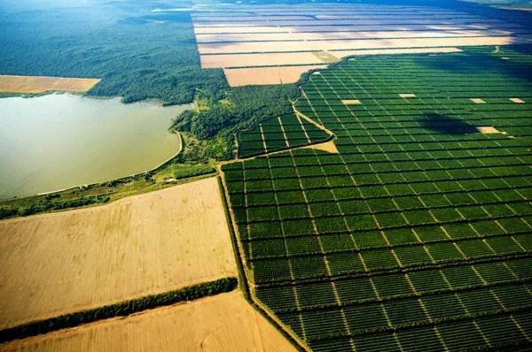 image of the article El campo de Argentina en quiebra