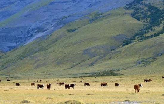Patagonia farmland
