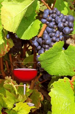 image of Chilean Grapes and Red wine
