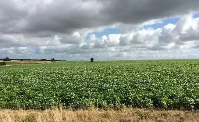 image of Uruguay Farmland