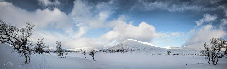 Gröthogna Norge