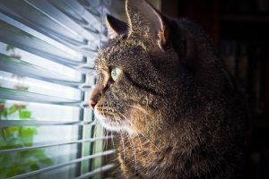 Gato en ventana