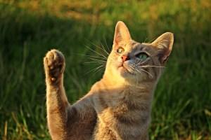 zampe-gatto