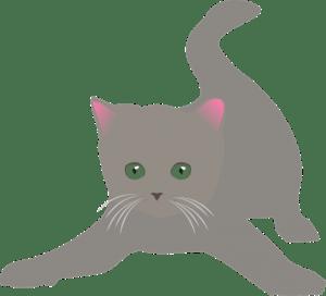 gatto-mondo