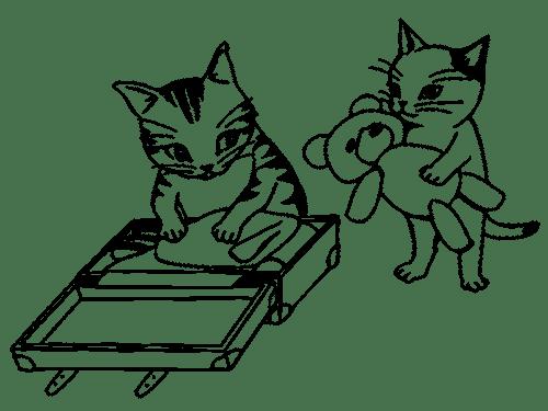 viaggio con gatto